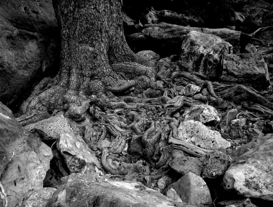 photoblog image roots