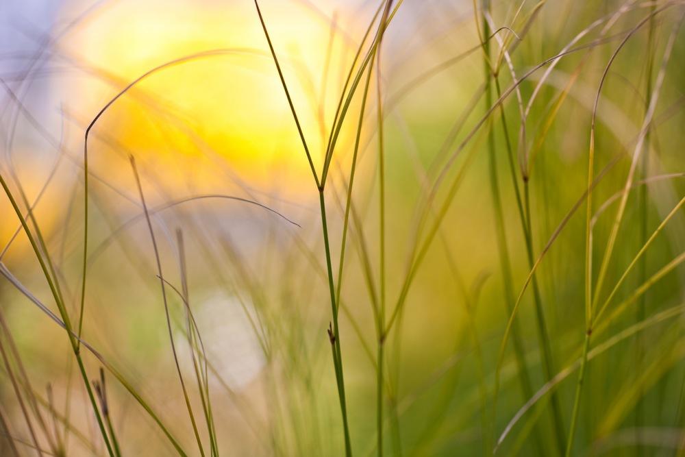 photoblog image warmth
